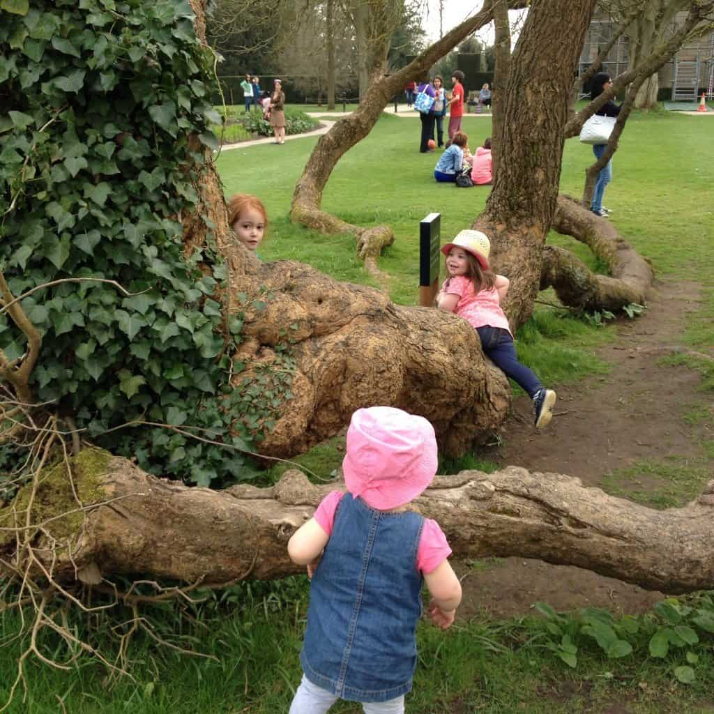 Ava, Thea and Bonnie climbing a tree