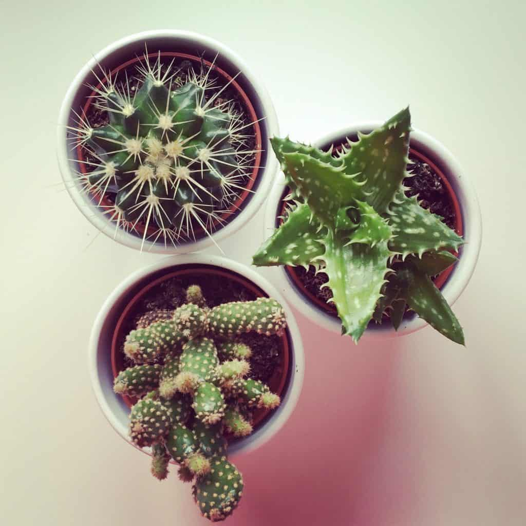 IKEA succulents, helping us liveLAGOM