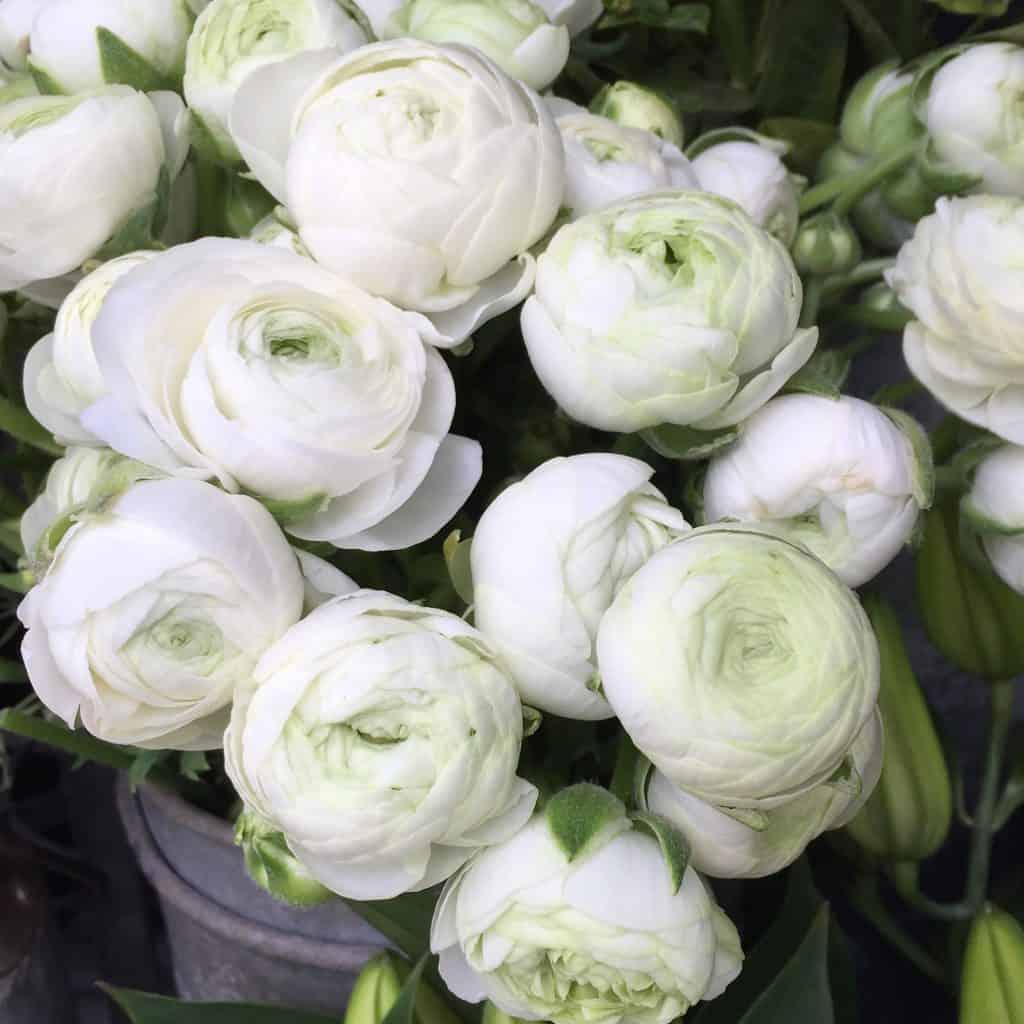 Beautiful white flowers outside Liberty's