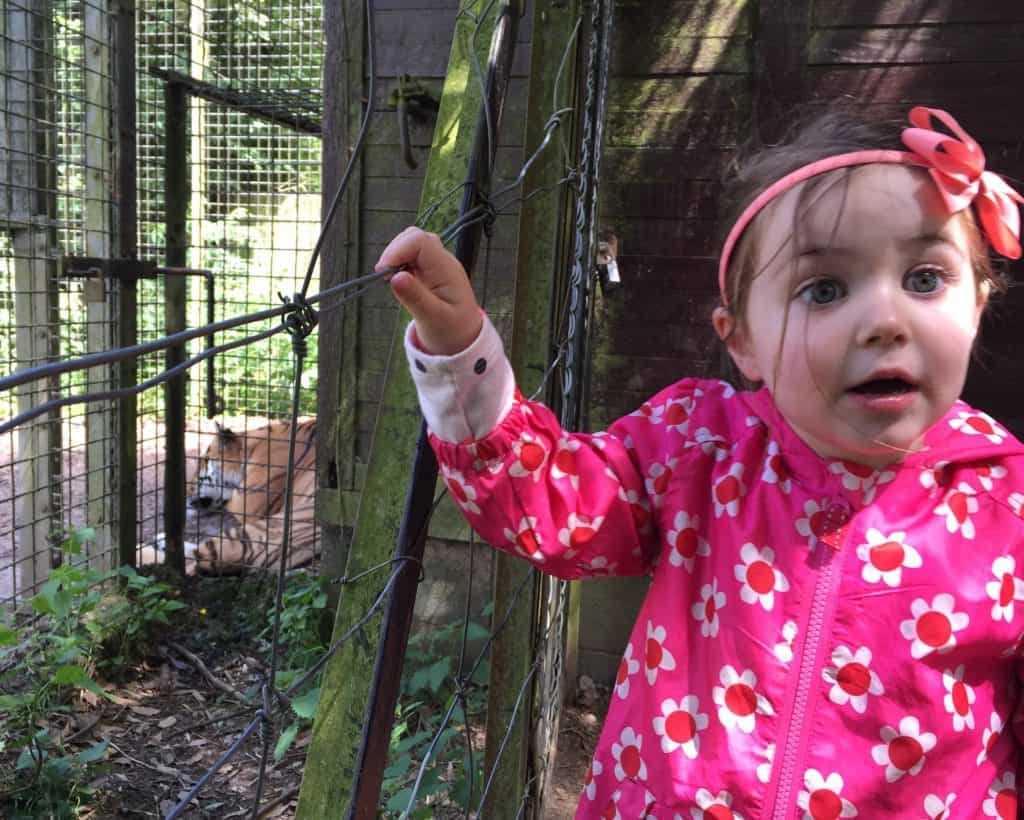 Thea couldn't believe her eyes at the tiger