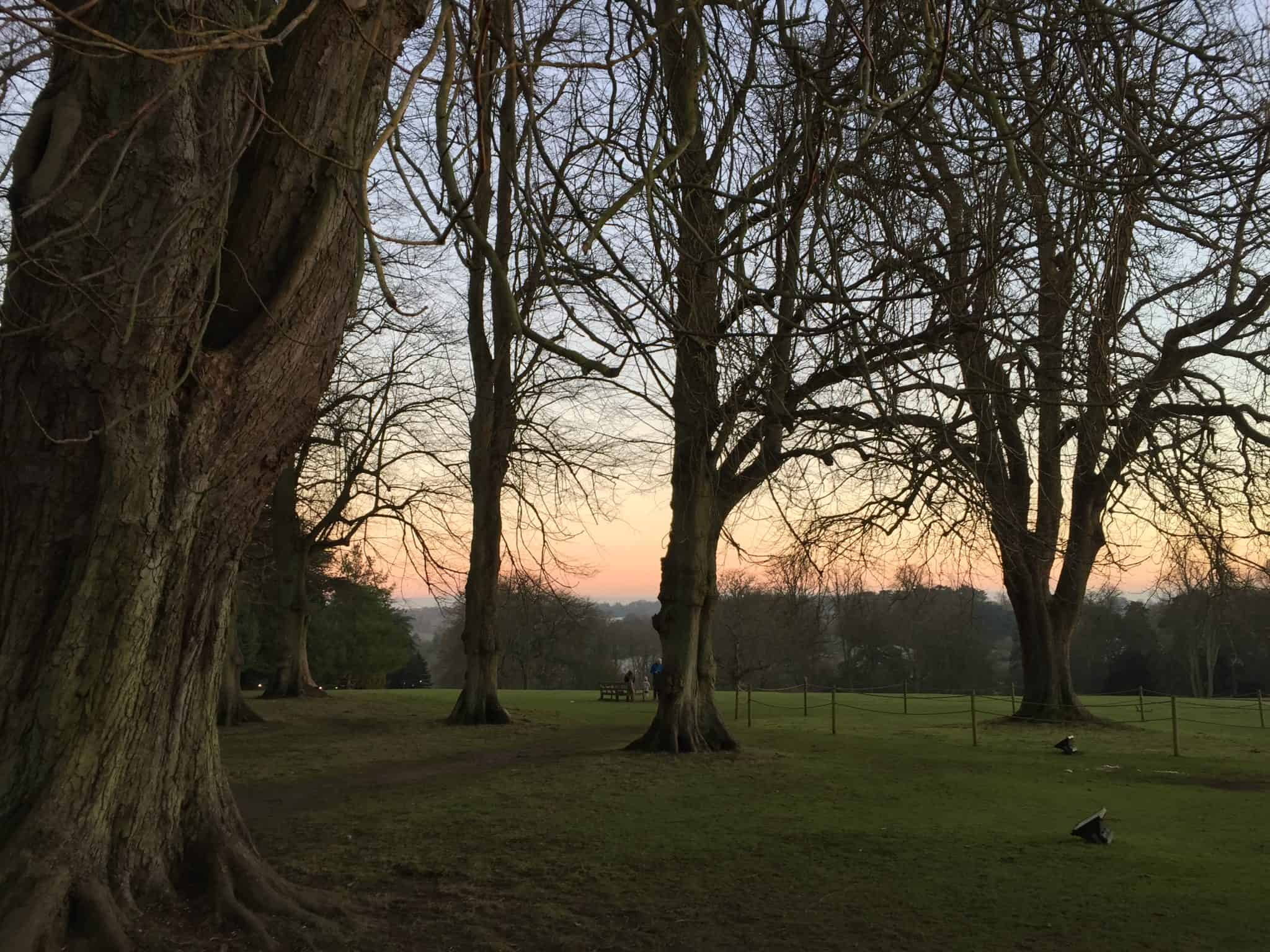 Waddesdon Manor grounds in winter