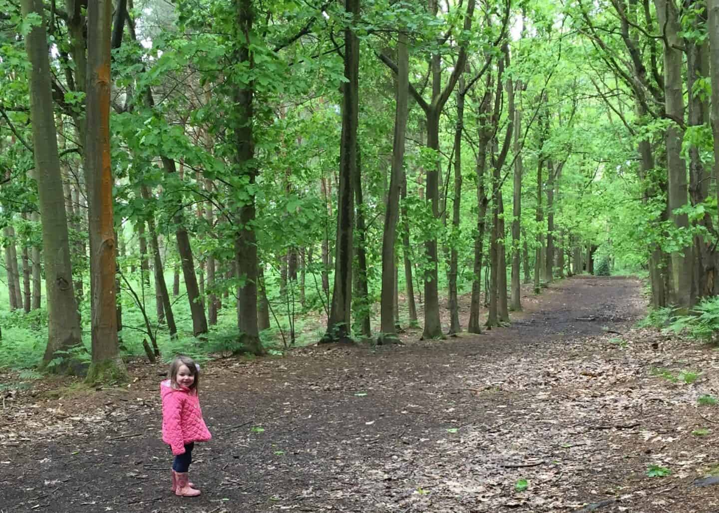 Beautiful green woods at Rushmere Country Park copy