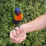 Bird feeding at Paradise Park Wildlife Sanctuary