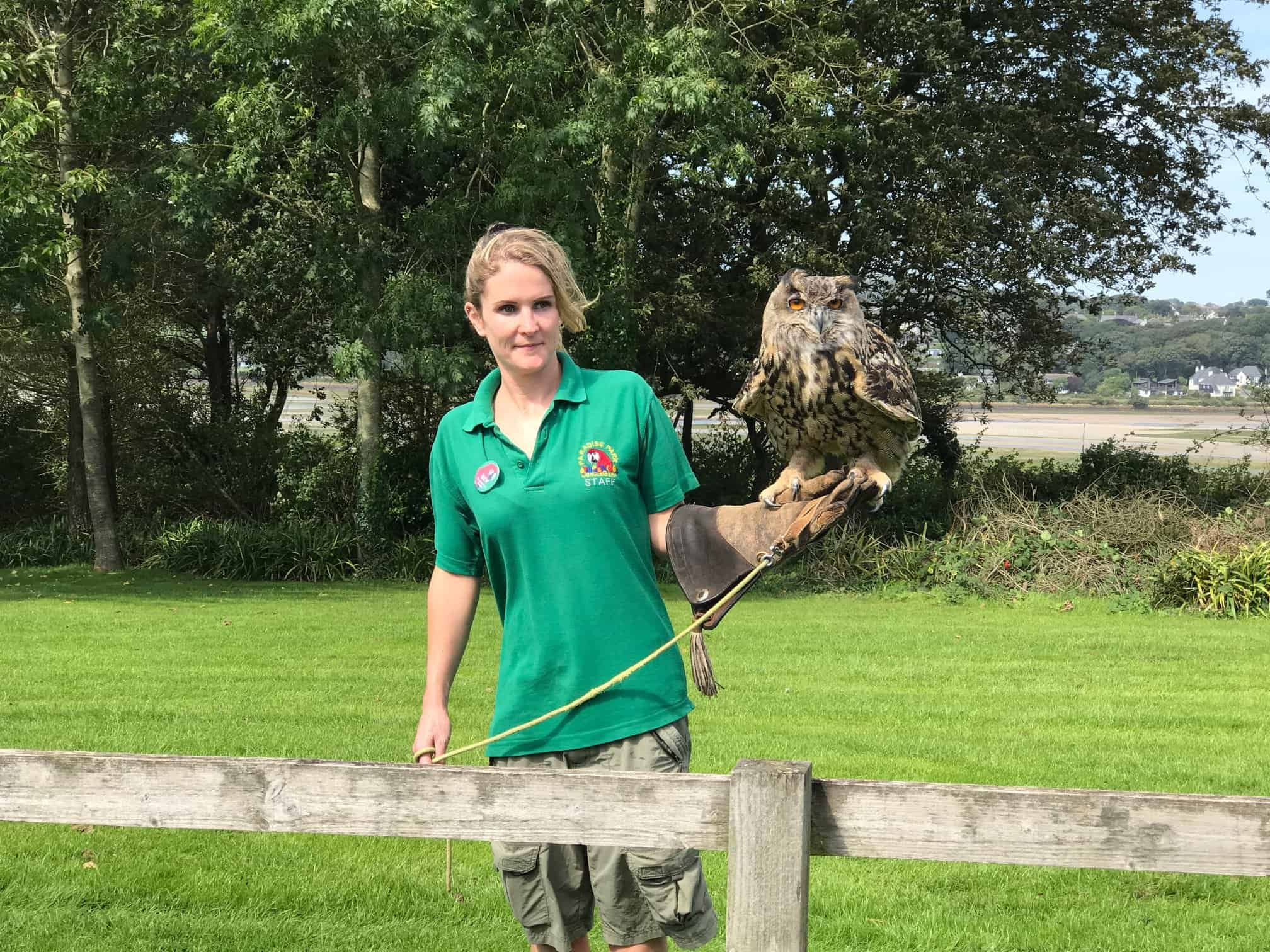 Bruno the European Eagle Owl at Paradise Park Wildlife Sanctuary