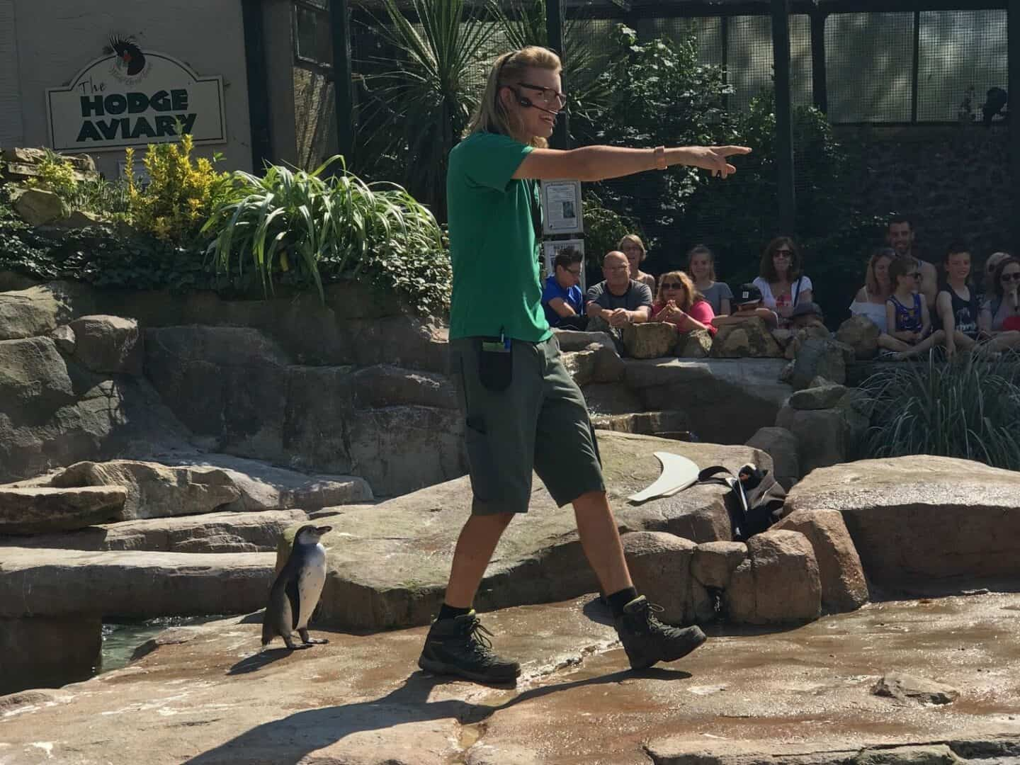 Penguin keeper at Paradise Park Wildlife Sanctuary