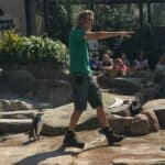 Penguin keeper at Paradise Park Wildlife Sanctuary