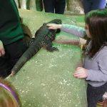 Stroking a reptile