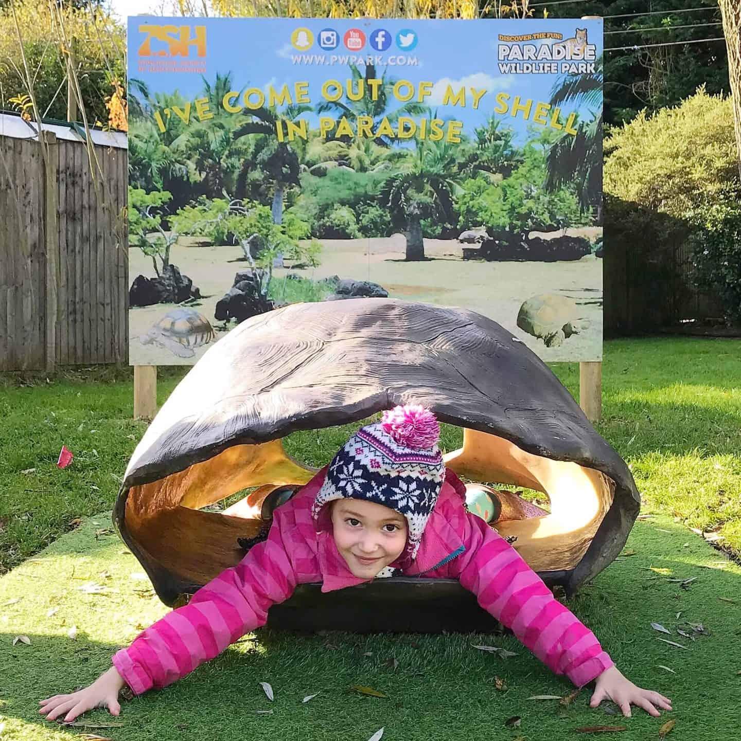 Tortoise fun at Paradise Wildlife Park, Hertfordshire