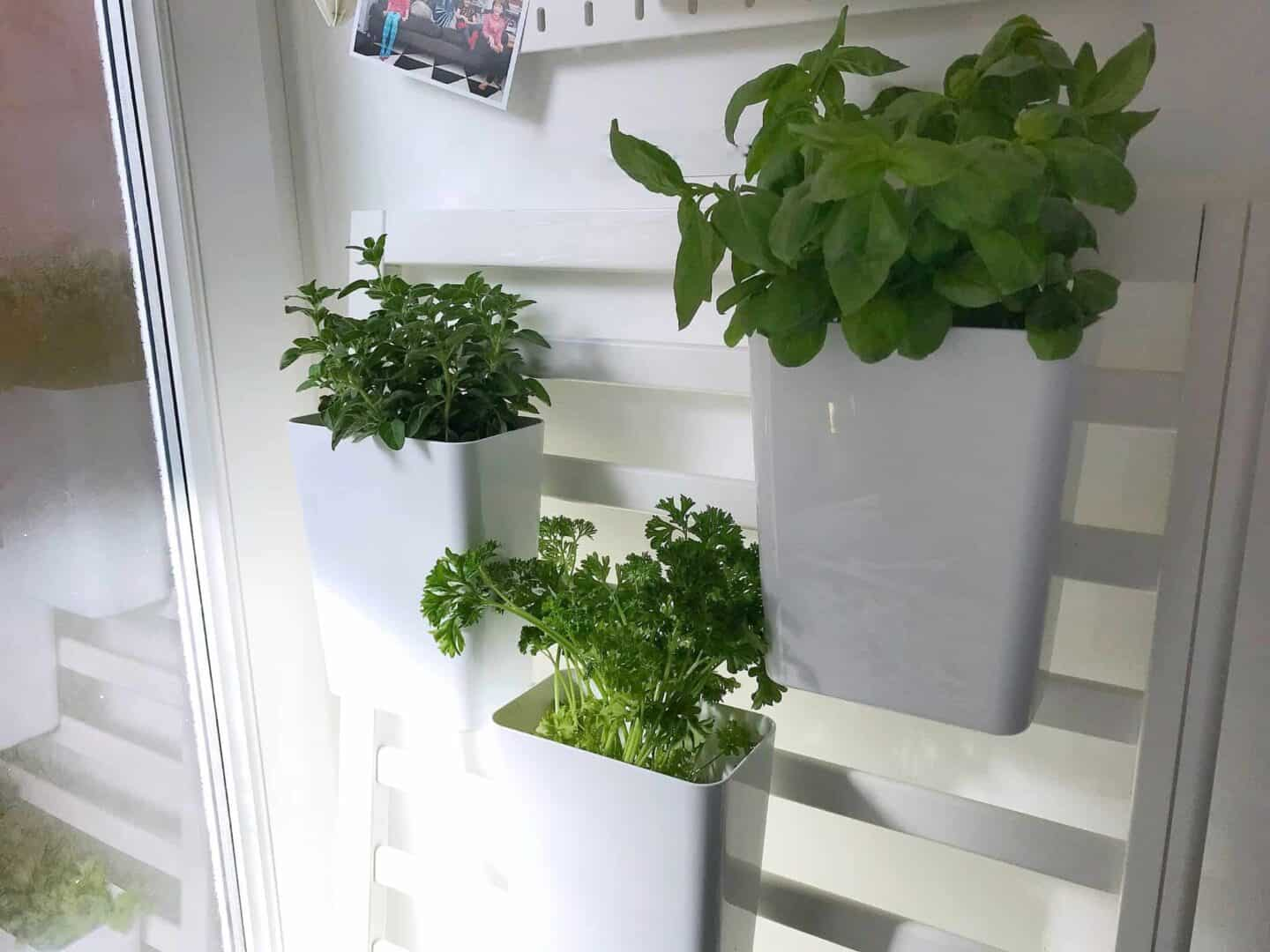How to Make an Indoor Salad Garden from an Old Cot Side