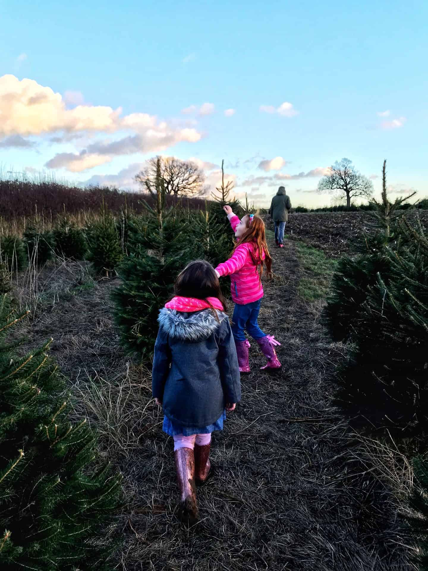 Looking for our ideal Christmas Tree