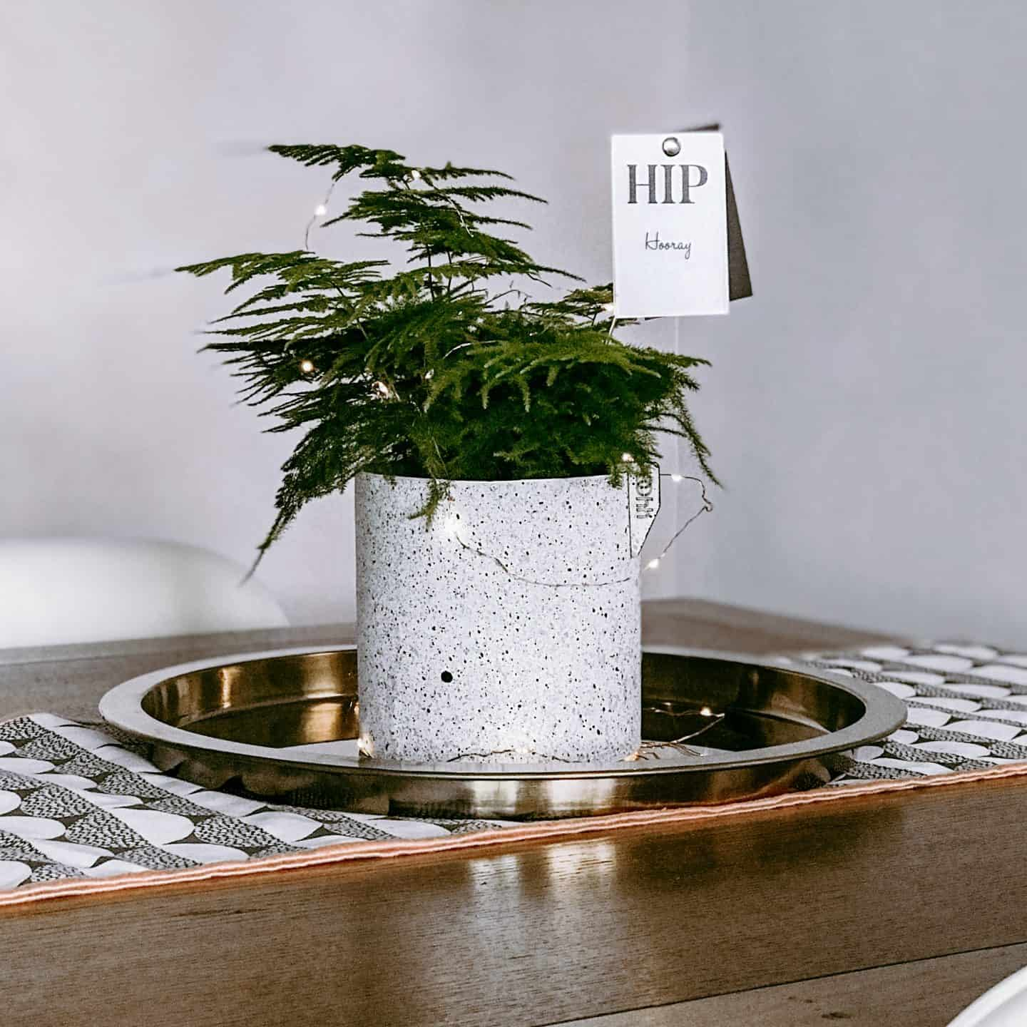 Martin & Cox Living Gifts plant